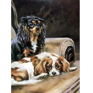 Resting Cavalier King Charles Card 6 Pack