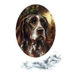 German Shorthair Pointer Card 6 Pack