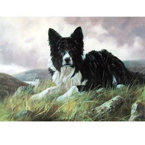 Collie On The Hillside Card 6 Pack (Border Collie)