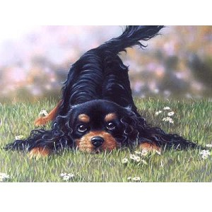 Come and Play Card 6 Pack (Gordon Setter)