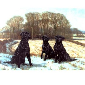 Early Snow Card 6 Pack (Labrador Retrievers)