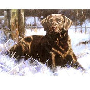 Chocolate Ice Card 6 Pack (Labrador Retriever)