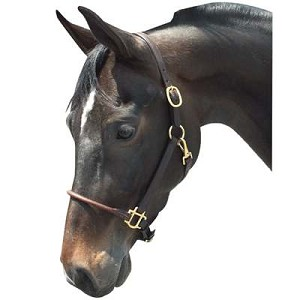 Arabian Horse Leather Halter