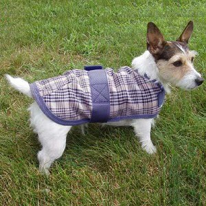High Spirit Plaid Dog Coat