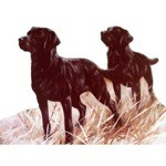 The Perfect Pair Card 6 Pack (Labrador Retriever)