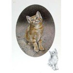 Kitten Card 6 Pack (Cat)