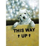 This Way Up Card 6 Pack (Labrador Retriever)