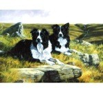 Waiting for the Whistle Card 6 Pack (Border Collie)