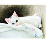 Snowy Card 6 Pack (Cat)