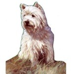 Sitting Westie Card 6 Pack (West Highland Terrier)