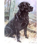 What A Dog Card 6 Pack (Labrador Retriever)