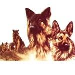 Profiles of the German Shepherd Card 6 Pack