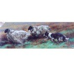 Working Hard Card 6 Pack (Border Collie)