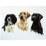 Three Wise Men Card 6 Pack (Labradors and Springers)