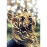 Yorkshire Terrier Profile Card 6 Pack