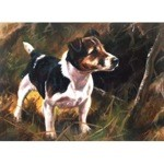 Jack Card 6 Pack (Jack Russell)