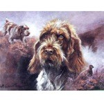Wirehaired German Pointer Card 6 Pack