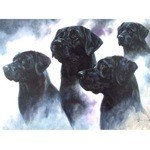 The Black Lab Card 6 Pack (Labrador Retriever)