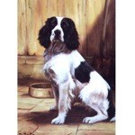 Supper Time Card 6 Pack (English Springer)