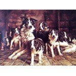 Who's There Card 6 Pack (Border Collie)