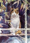 Tabby at the Window Card 6 Pack (Cat)