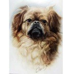 The Pekinese Card 6 Pack