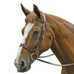 Exselle Elite Flat Hunting Bridle