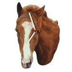Chestnut Thoroughbred Horse Head Clock