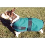 High Spirit Dog Rain Coat