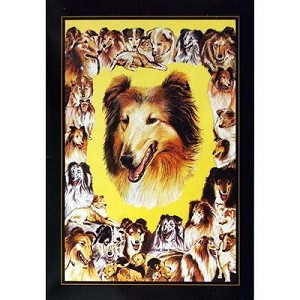 Rough Collie Card 6 Pack