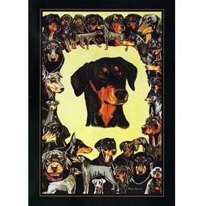 Doberman Card 6 Pack