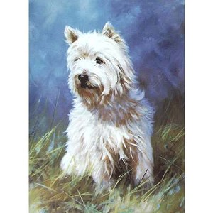 The Westie in the Grass Card 6 Pack (West Highland Terrier)