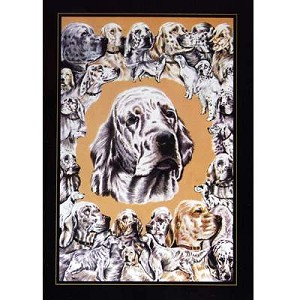 English Setters Card 6 Pack