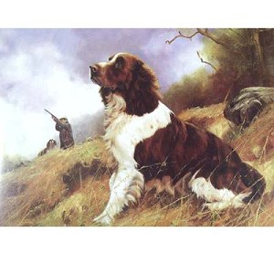 Eye on the Bird Card 6 Pack (English Springer)