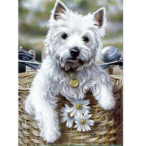 Hitching a Ride Card 6 Pack  (West Highland Terrier)