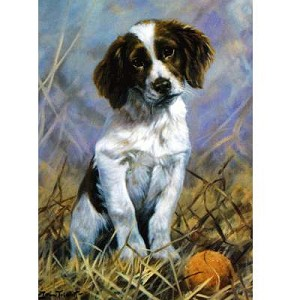 Play Ball Card 6 Pack (English Springer)
