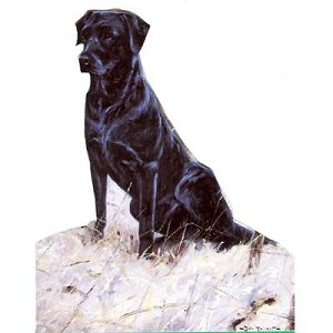 Lab in the Snow Card 6 Pack (Labrador Retriever)