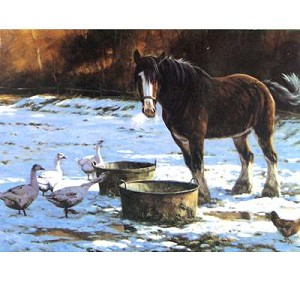 Christmas Lunch Card 6 Pack (Clydesdale)