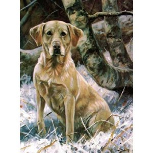 Sitting Yellow Lab Card 6 Pack (Labrador Retriever)