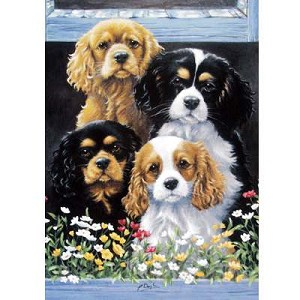 The Window Box Card 6 Pack (Cavalier King Charles)