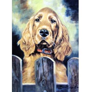 Irish Eyes Card 6 Pack (Cocker Spaniel)