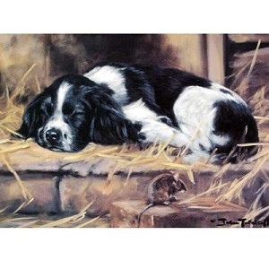 Snoozy Card 6 Pack (English Springer)