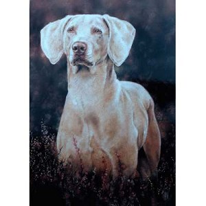 A Ghost of A Dog Card 6 Pack (Weimaraner)