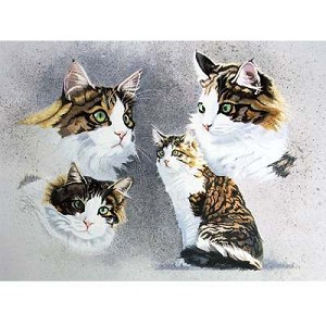 Tortoiseshell Card 6 Pack (Cat)