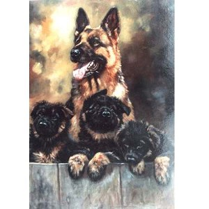 Proud Mum Card 6 Pack ( German Shepherd & Puppies)