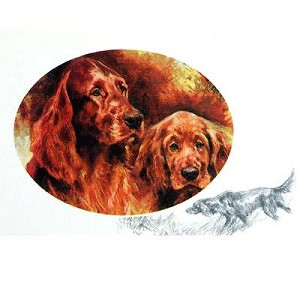 Red Setters Card 6 Pack (Irish Setters)