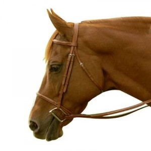 Exselle Elite Square Raised Bridle