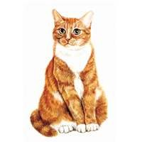 Ginger and White Cat Clock