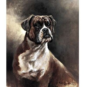 Portrait of A Boxer Print (Dog)