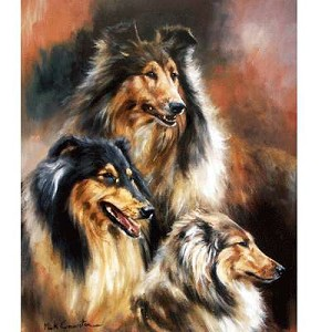 The Rough Collie Print
